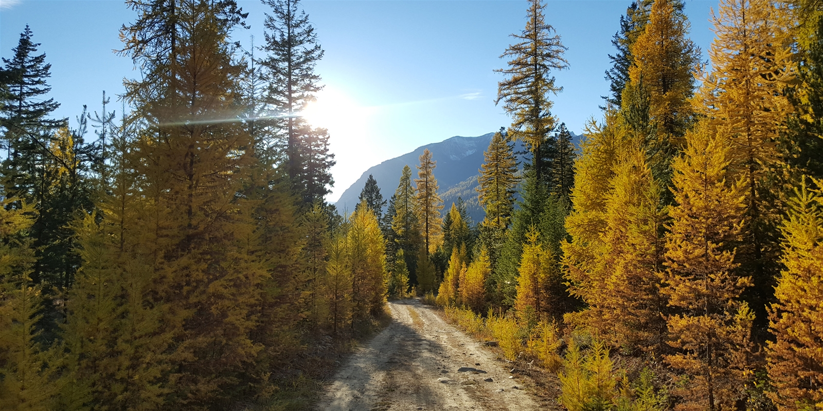 Larch Hunting